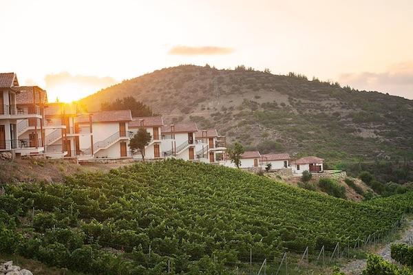 Gillham Vineyard Cyprus